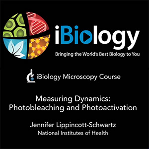 ibio-photobleach