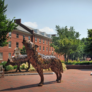 Wire wolf statues on campus
