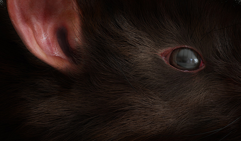 close-up of rat with genetic code reflected in eye