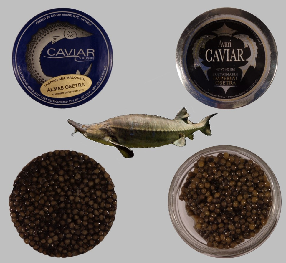 Caviar Pic for Andy
