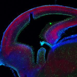 Cellular & Molecular Neuroscience image