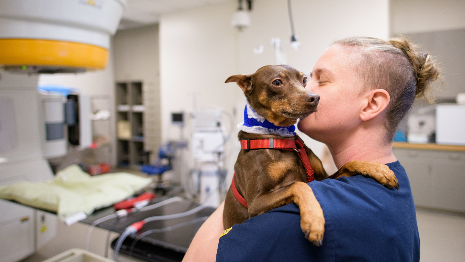 CVM staff comforts a small dog before treatment