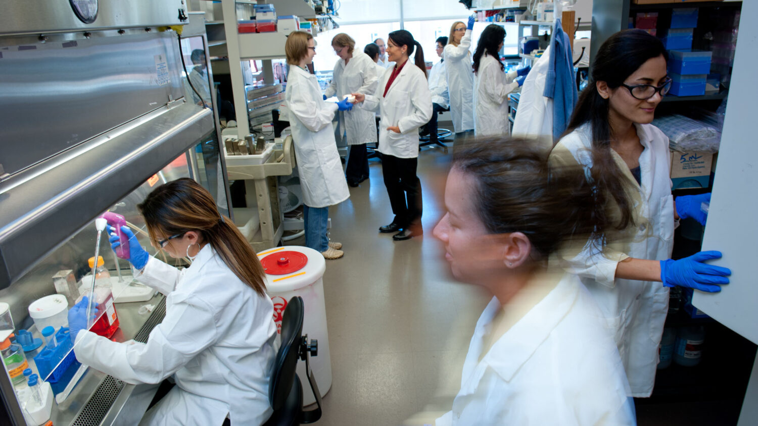 Students working in Dr. Elizabeth Loboa's lab