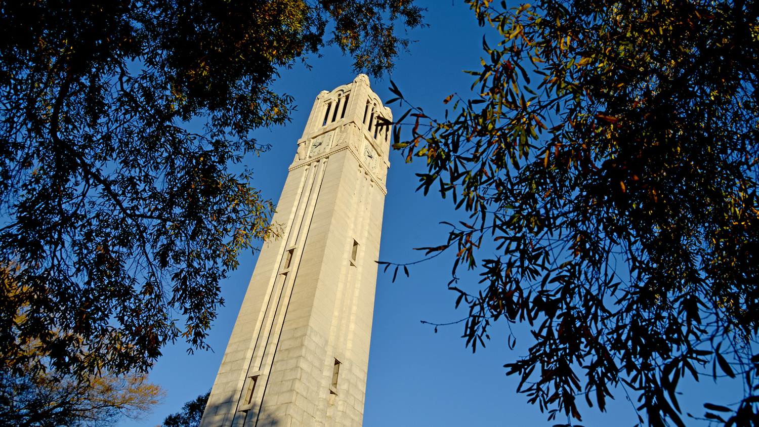 belltower and trees