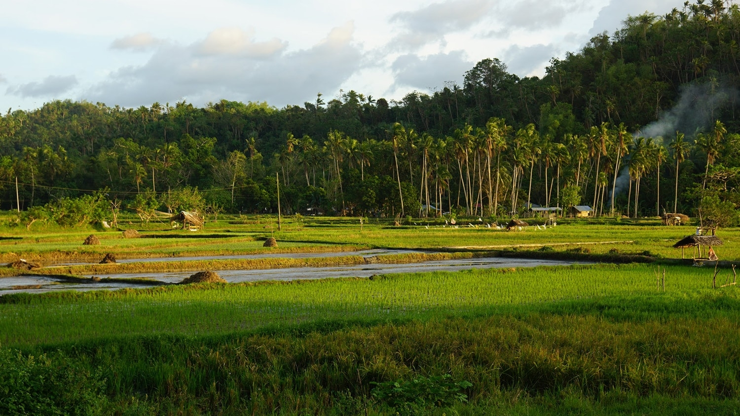 A rice field in the Philippines.