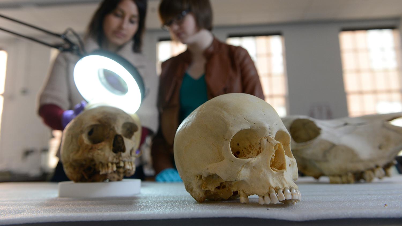 skull on a lab table