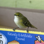 bird perching on a box
